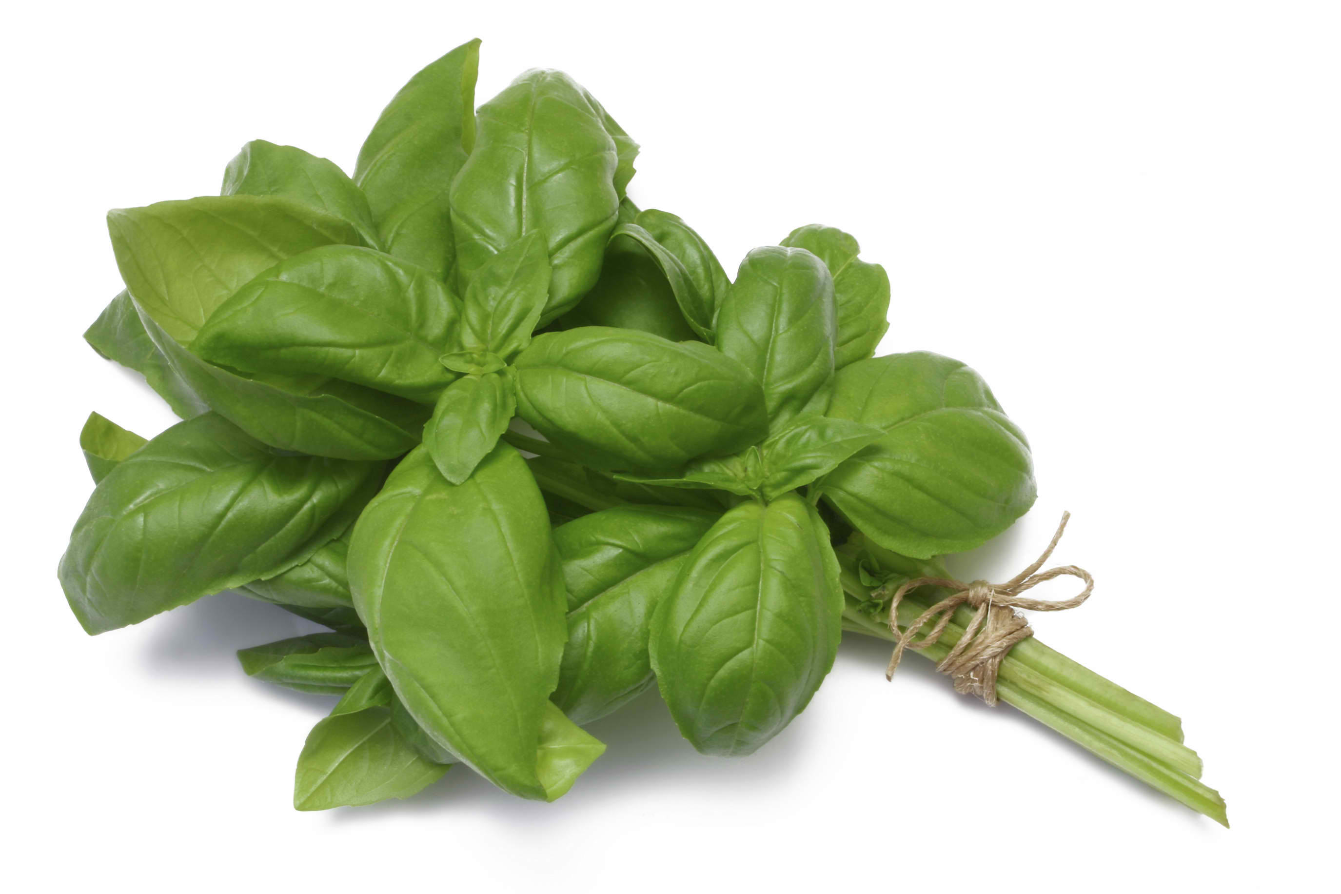 Bunch-of-Basil
